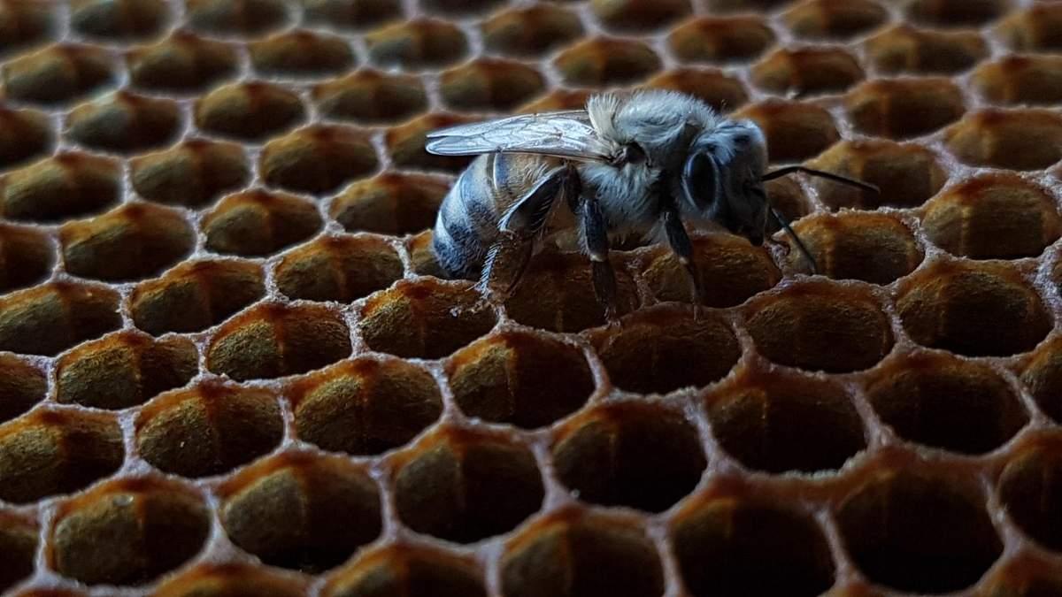 У вигляді бджолиних стільників: в Італії розробили житло майбутнього – фото