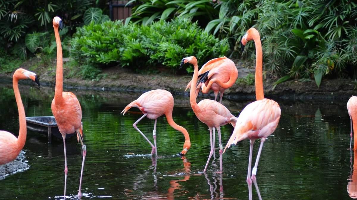 Розовые фламинго является главной особенностью центра