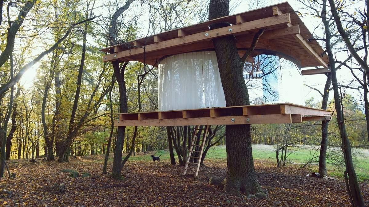 Прозора хатинка на дереві: в Чехії з'явилась незвична споруда – фото