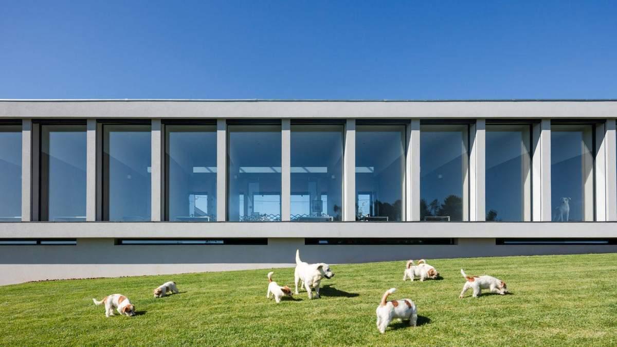 Среди виноградника: в Португалии построили отель для кошек и собак – фото