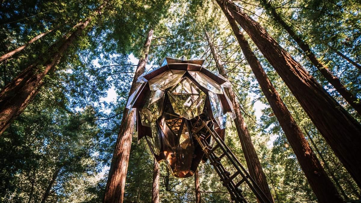 Отель в форме шишки – в лесах США можно забронировать отдых на дереве: фото