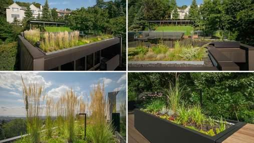 Єднання з природою: дивовижний сад на даху міського будинку