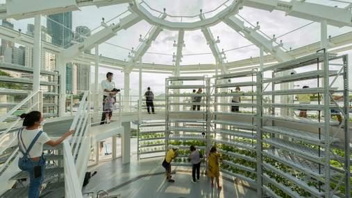 Космическая теплица с зеленью: в Гонконге создали уникальный проект для городского садоводства